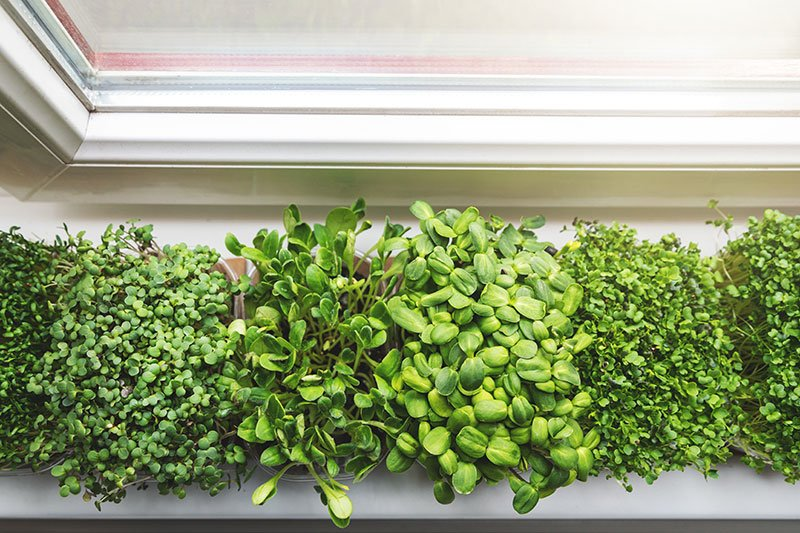 The surprising link between in home sprouting, your personal health and the climate crisis.