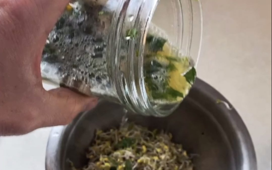 Sprout salad with cilantro citrus dressing. Try with TACOS!