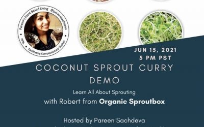 Three sprout red curry coconut soup!